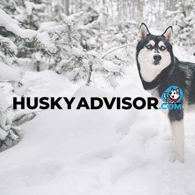 Blog pentru HuskyAdvisor.com